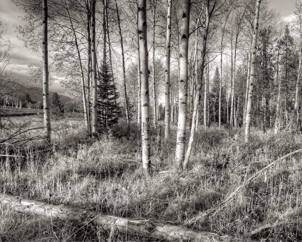 Jackson Hole, Wyoming in Teton National Park.  Its an HDR in black and white